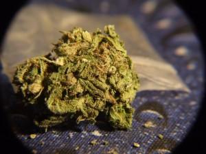 Dro-Marijuana-300x225