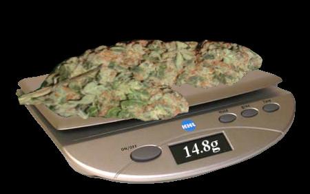 взвешивание марихуаны