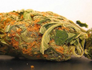 Beasters-Marijuana-300x229